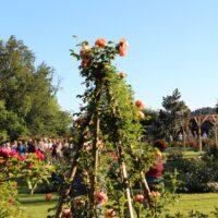 17. Slovenski dan vrtnic