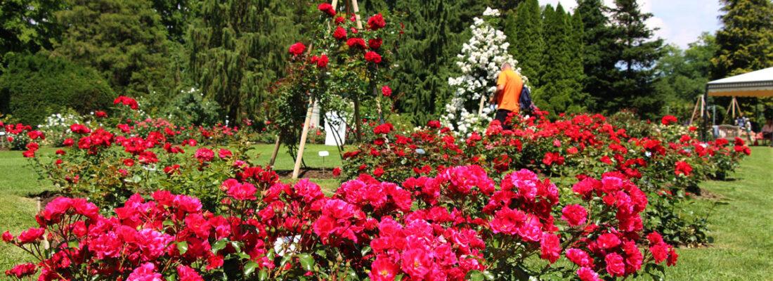 18. Slovenski dan vrtnic